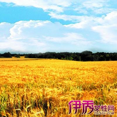 梦见金色的稻田_