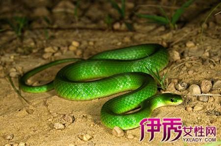 梦见把绿色的蛇弄死了
