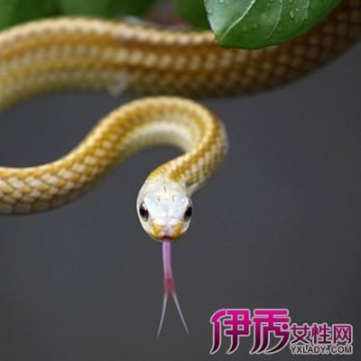 梦见蛇断了怎么回事