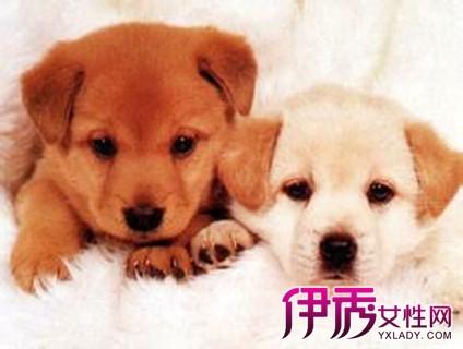 【狗和什么属相最配】【图】狗和什么属相最配