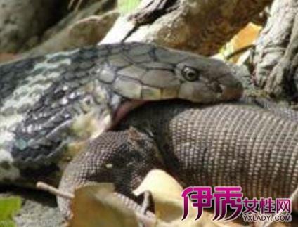 孕妇梦见肚子里有乌龟