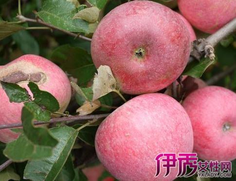 【梦见吃虫子有孕妇】【图】苹果梦见吃图片有猪腰煮粥苹果图片