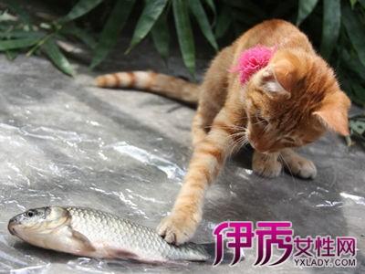 梦见喂猫吃屎有什么预兆