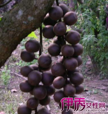 梦见葡萄树结满了葡萄
