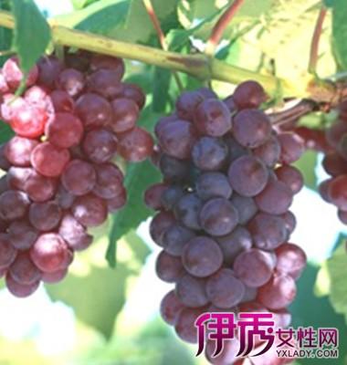 如果梦见葡萄树结满了葡萄