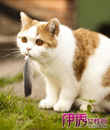风水知识 周公解梦 >> 正文  梦见猫追我是什么意思 做梦梦到猫追我的