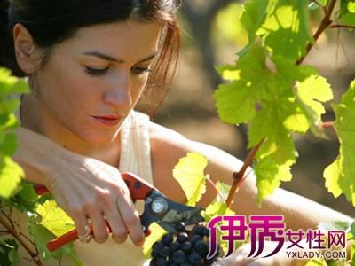 【孕妇梦见摘葡萄吃】【图】孕妇梦见摘葡萄吃