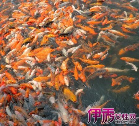 梦到水里好多鱼有死鱼