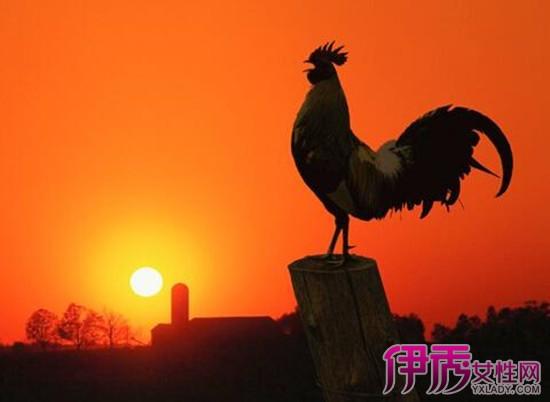 【属鸡的特点性格】【图】v特点属鸡的性格特点天秤座描写图片