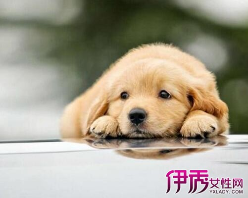 【男属鸡女属狗】【图】男属鸡女属狗配不配呢爱情座o型血水瓶男人图片