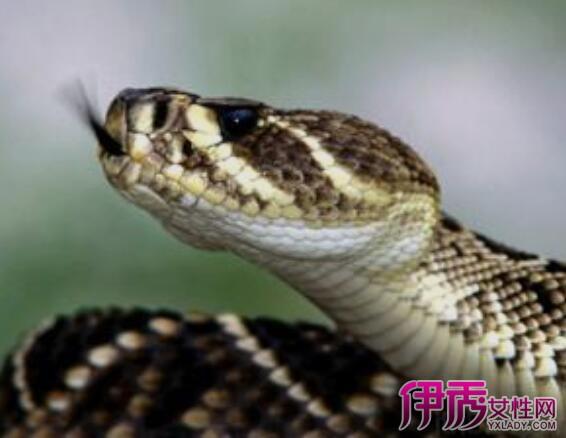 【昨晚梦见蛇追我】【图】昨晚梦见蛇追我怎么