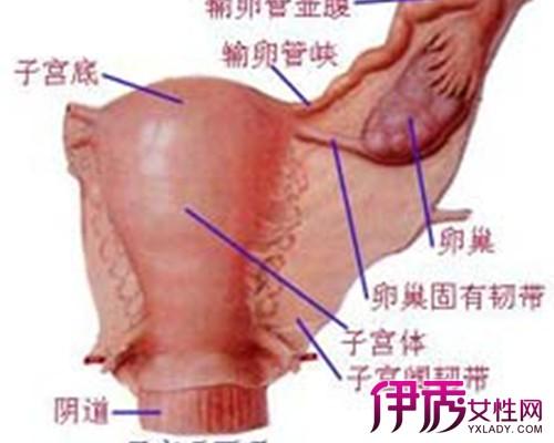 肩部骨骼结构图