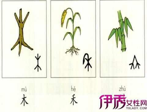 鱼象形文字-幼儿识字象形字 不一样的教学方式