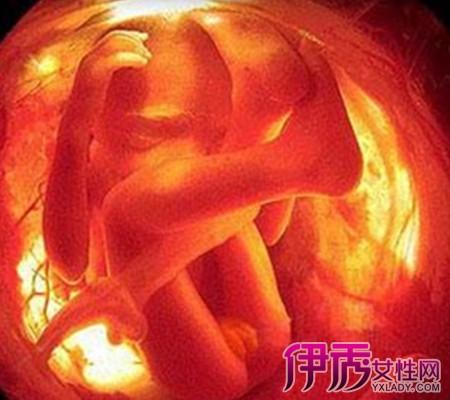 怀孕十个月过程图片鉴赏 分析宝宝各个阶段的发育过程图片