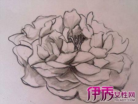 【简单手绘花铅笔画】【图】简单手绘花铅笔画欣赏