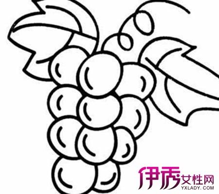 【幼儿葡萄简笔画】【图】幼儿葡萄简笔画欣赏
