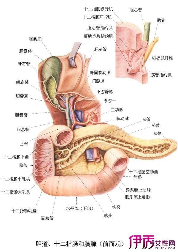 【胰腺炎的症状】【图】胰腺炎的症状有哪些