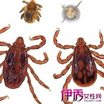 它是昆虫纲的节肢类动物