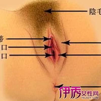 【女性生殖器】【图】女性生殖器是怎样的 了