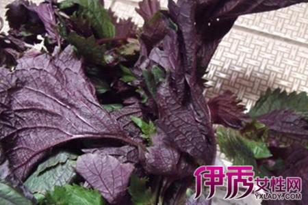 紫苏叶的吃法_紫苏叶的吃法大全10种紫苏叶食谱推荐美食