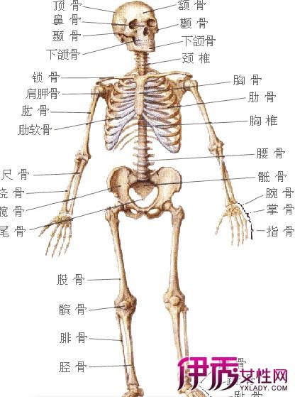 6块骨骼,分为颅骨、躯干和四肢3个大部分.它们分布在全身各部