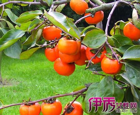 吃柿子的好处和坏处_吃柿子的好处与坏处