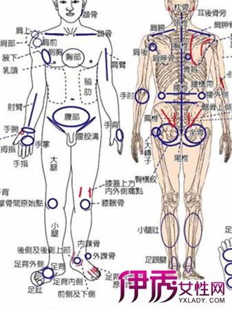 【人体部位名称】【图】人体部位名称及体表标