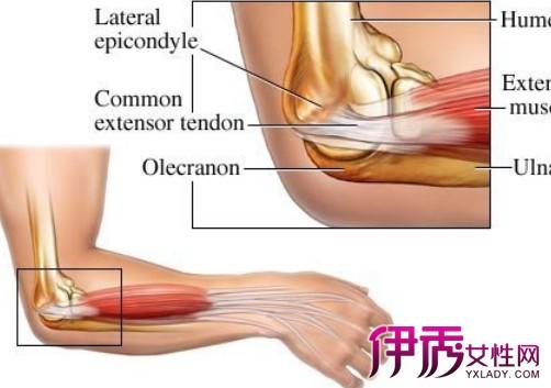 【胳膊肘疼是怎么回事】【图】胳膊肘疼是怎么回事呢