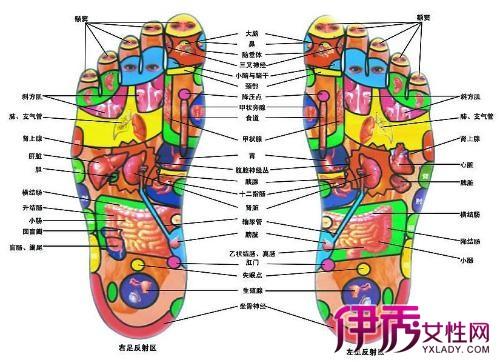 【脚部位名称图解】【图】脚部位名称图解在哪儿