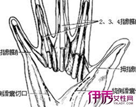 手腕部位名称图解
