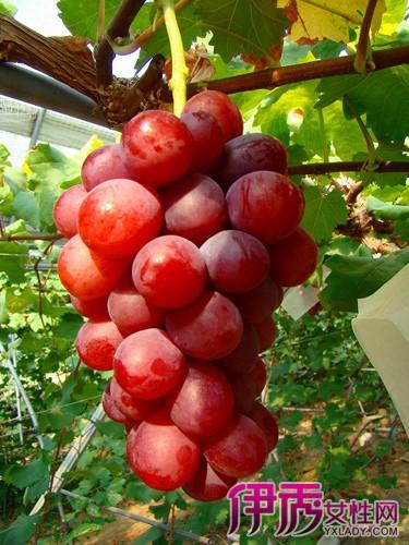 【葡萄吃多了会胖吗】【图】葡萄吃多了会胖吗