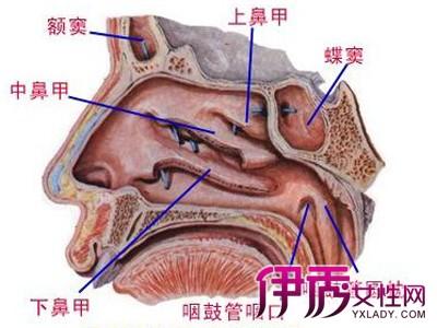 鼻腔3d结构图