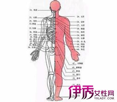 【人体经络图】【图】我们的身体人体经络图片