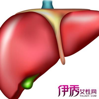 肝脏功能检查_肝脏的功能