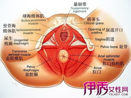 【压力性尿失禁】【图】为什么会得压力性尿失