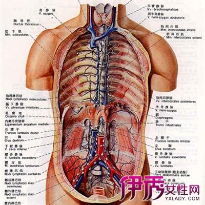 揭秘腹部淋巴结肿大是什么 腹部淋巴结肿大是什么原因