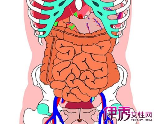 【人体内脏结构图】【图】人体内脏结构图分享