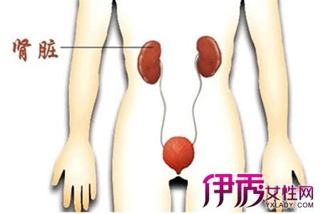 【一个肾对人有什么影响】【图】盘点一个肾对