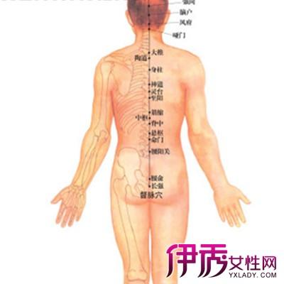 观看背部经络图 了解更多经络常识