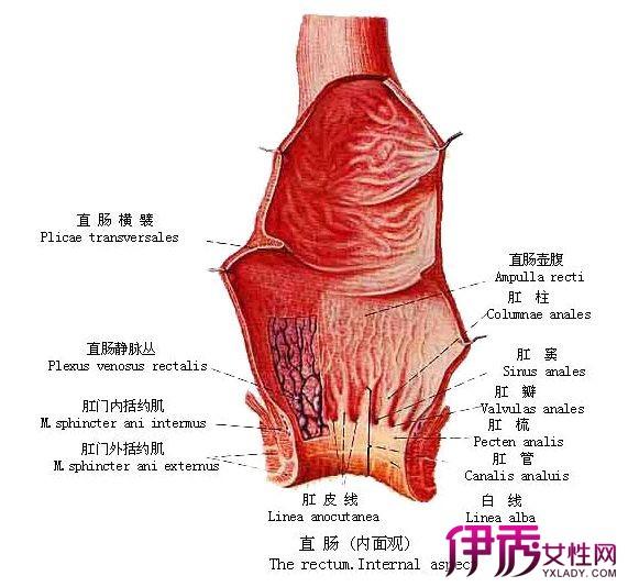 【直肠癌便血大便图片】【图】探讨直肠癌便血