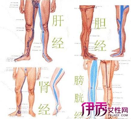 腿部六条经络图集 九步教你拍打腿部经络