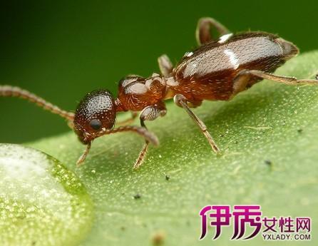 被蚂蚁咬了怎么止痒消肿 揭秘如何预防被蚂蚁咬