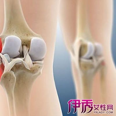 膝关节的解剖图大全 让你了解膝关节