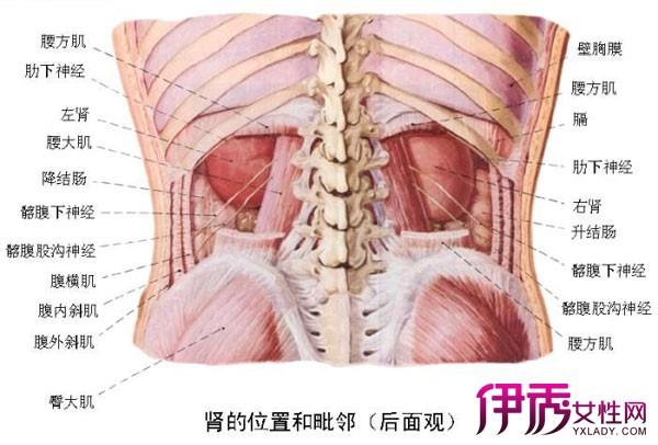 【子宫在肚子位置图】【图】子宫在肚子位置图解析