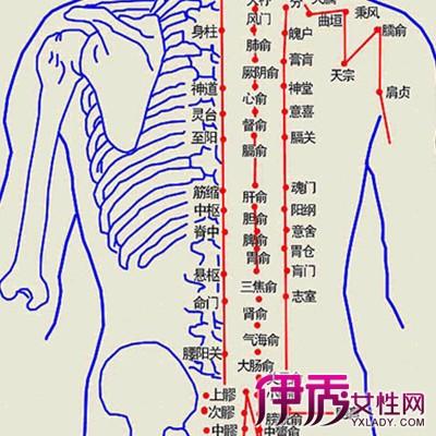 学习后背穴位图解 十一个后背穴位的位置和作用大讲解