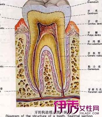 【牙齿发炎吃什么消炎药】【图】牙齿发炎吃什