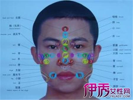 【脸部器官对应图解】【图】脸部器官对应图解