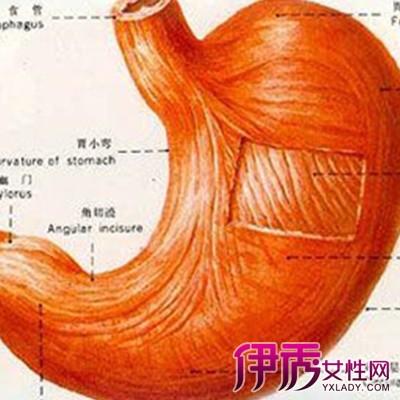 胃在身体的哪个部位 胃病防治的3大方法