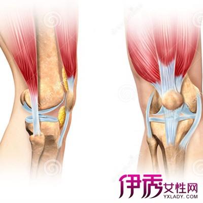 膝关节解剖图展示 学习更多人体生理结构常识