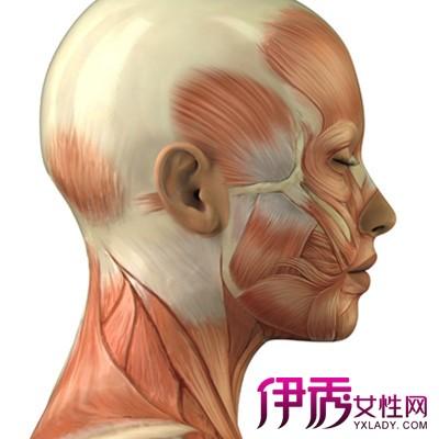 【人体头部结构】【图】人体头部结构图片